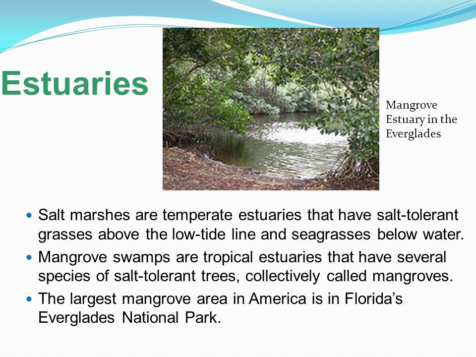 Estuaries Mangrove Estuary in the Everglades.