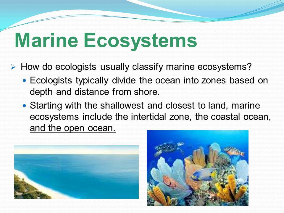 Marine Ecosystems How do ecologists usually classify marine ecosystems