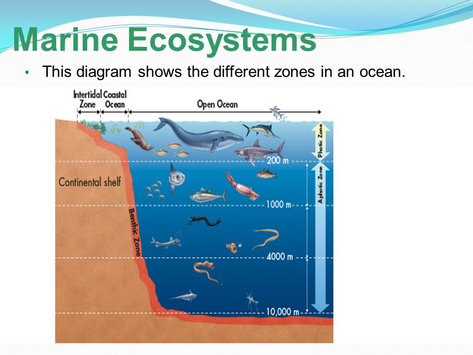 Marine Ecosystems This diagram shows the different zones in an ocean.