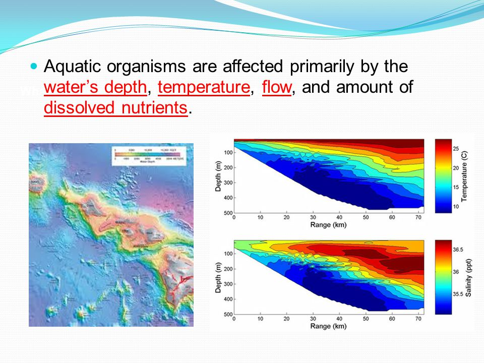 What factors affect life in aquatic ecosystems