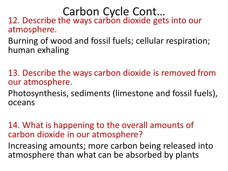 Carbon Cycle Cont… 12. Describe the ways carbon dioxide gets into our atmosphere.