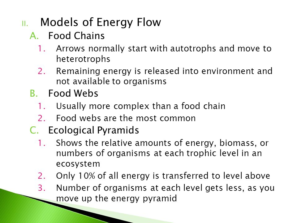 Models of Energy Flow Food Chains Food Webs Ecological Pyramids