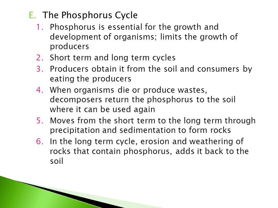 The Phosphorus Cycle Phosphorus is essential for the growth and development of organisms; limits the growth of producers.