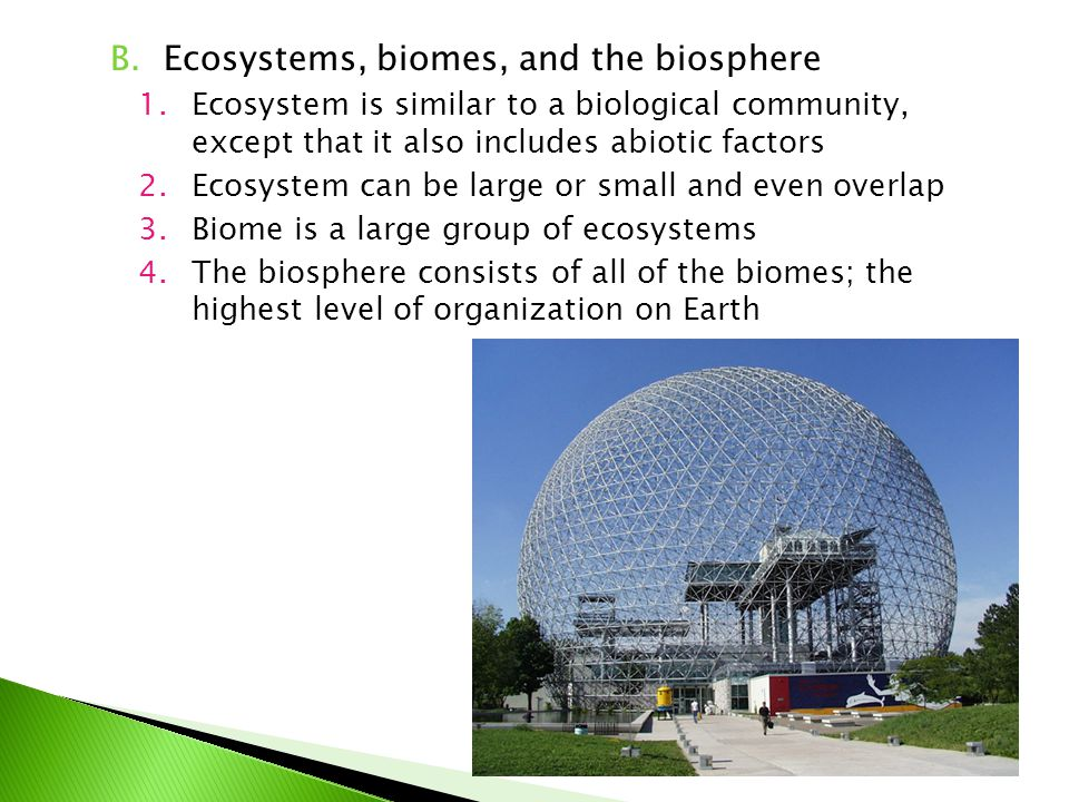 Ecosystems, biomes, and the biosphere