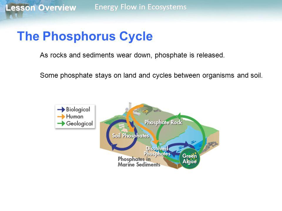 The Phosphorus Cycle As rocks and sediments wear down, phosphate is released.