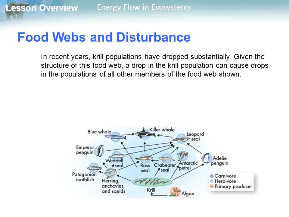 Food Webs and Disturbance