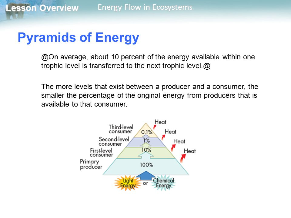 Pyramids of Energy @On average, about 10 percent of the energy available within one trophic level is transferred to the next trophic level.@