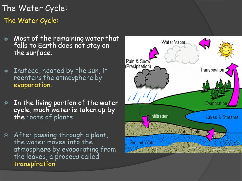 The Water Cycle: The Water Cycle: