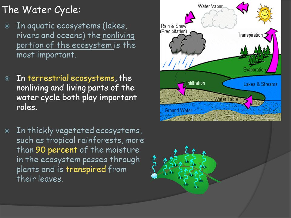 The Water Cycle: In aquatic ecosystems (lakes, rivers and oceans) the nonliving portion of the ecosystem is the most important.