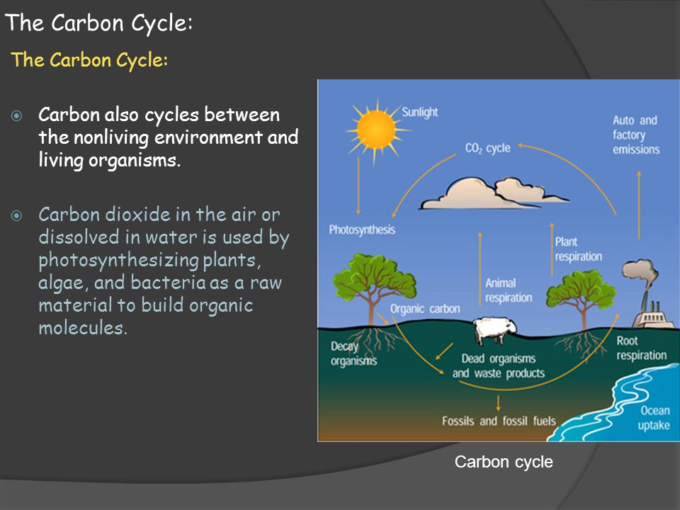 The Carbon Cycle: The Carbon Cycle: