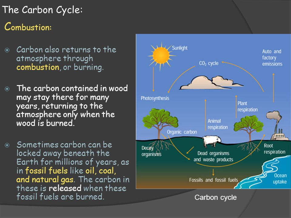 Combustion: The Carbon Cycle: