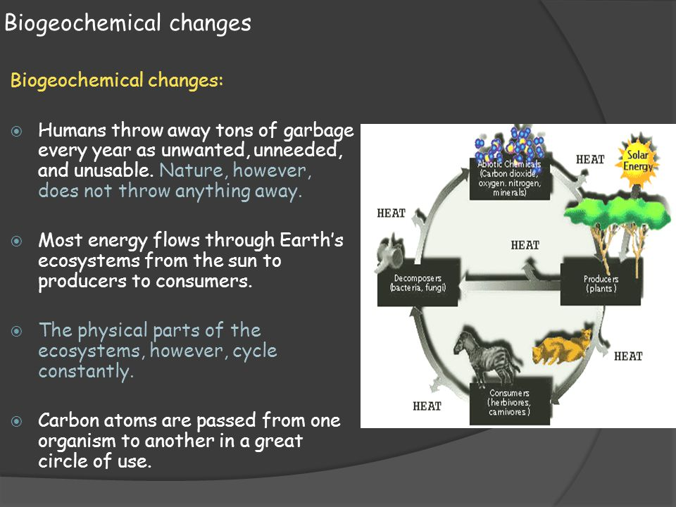 Biogeochemical changes