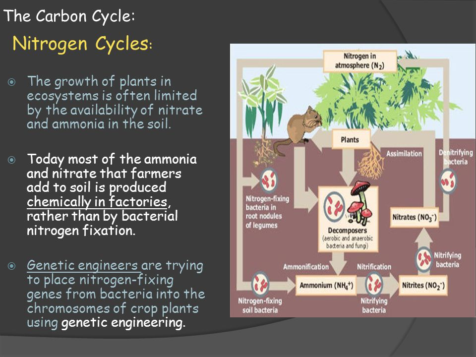 Nitrogen Cycles: The Carbon Cycle: