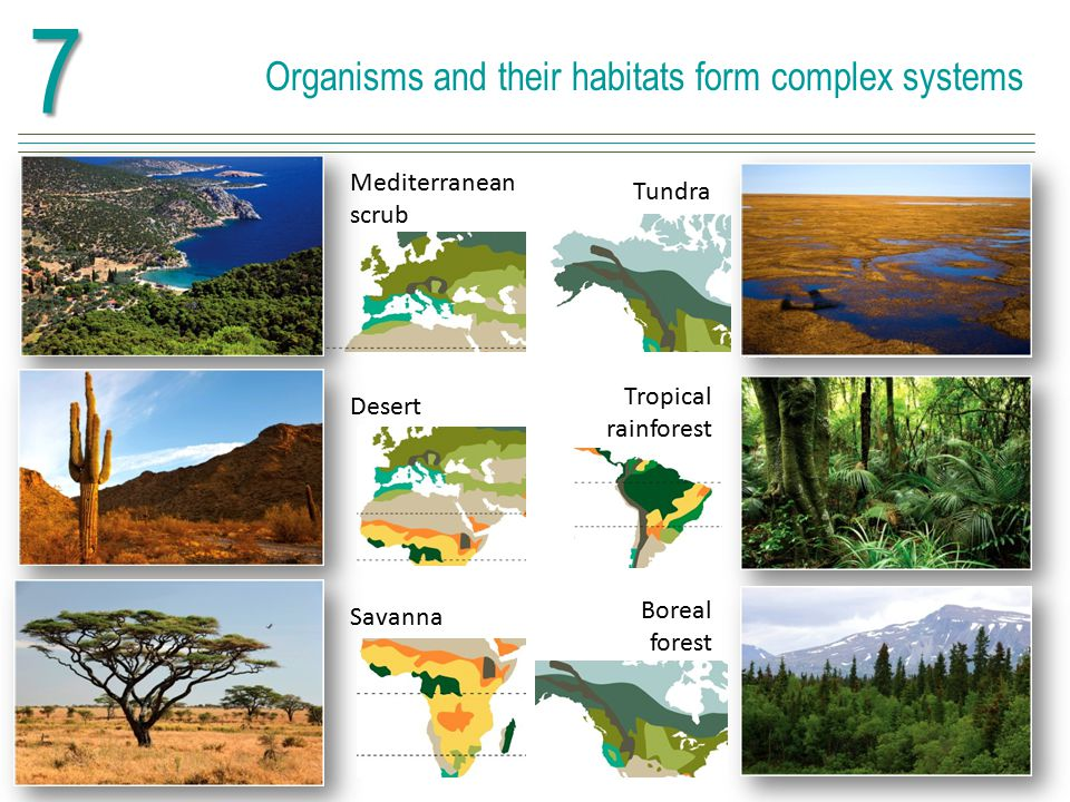 7 Organisms and their habitats form complex systems
