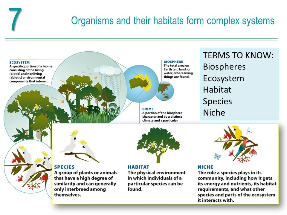 7 Organisms and their habitats form complex systems TERMS TO KNOW: