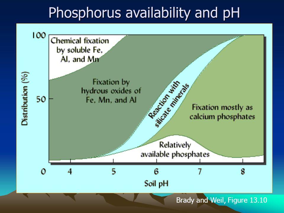 Phosphorus availability and pH