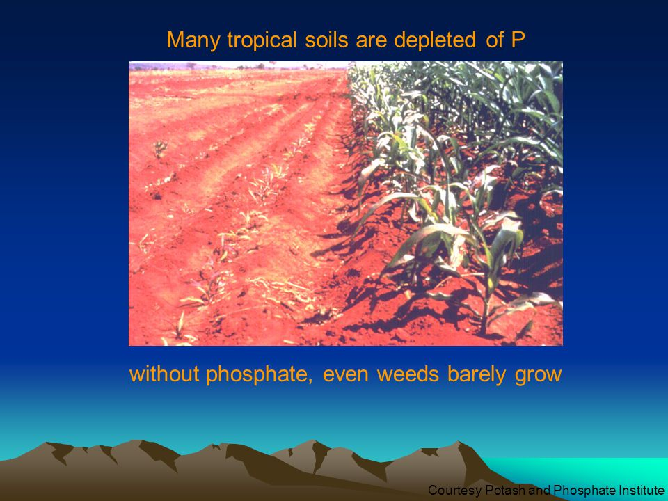 Many tropical soils are depleted of P