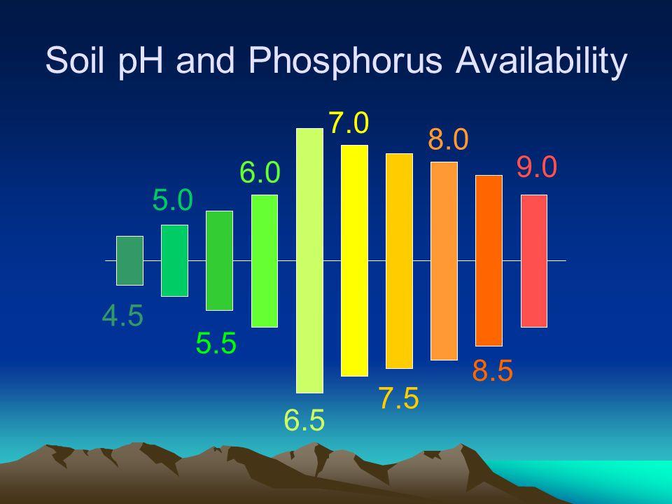 Soil pH and Phosphorus Availability