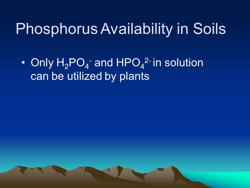 Phosphorus Availability in Soils