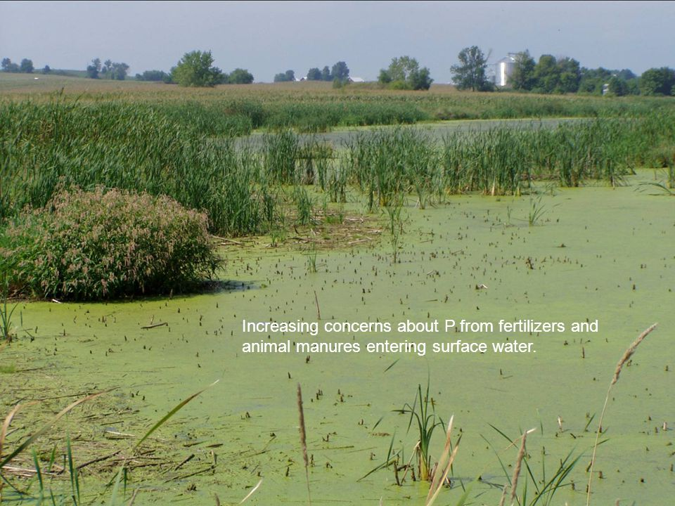 Increasing concerns about P from fertilizers and
