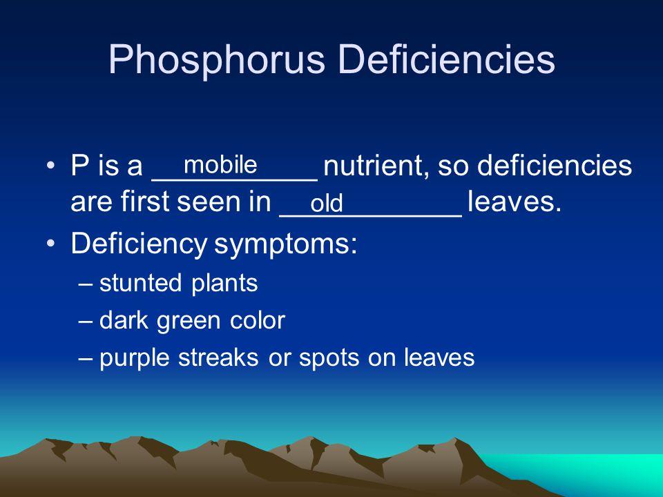 Phosphorus Deficiencies