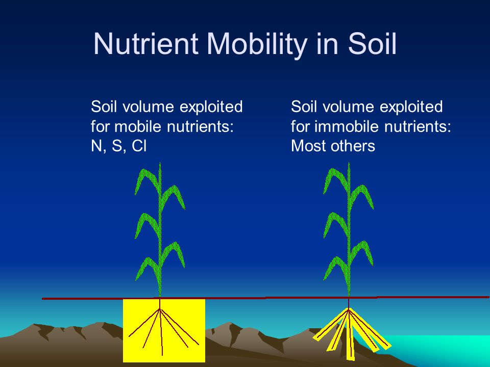 Nutrient Mobility in Soil