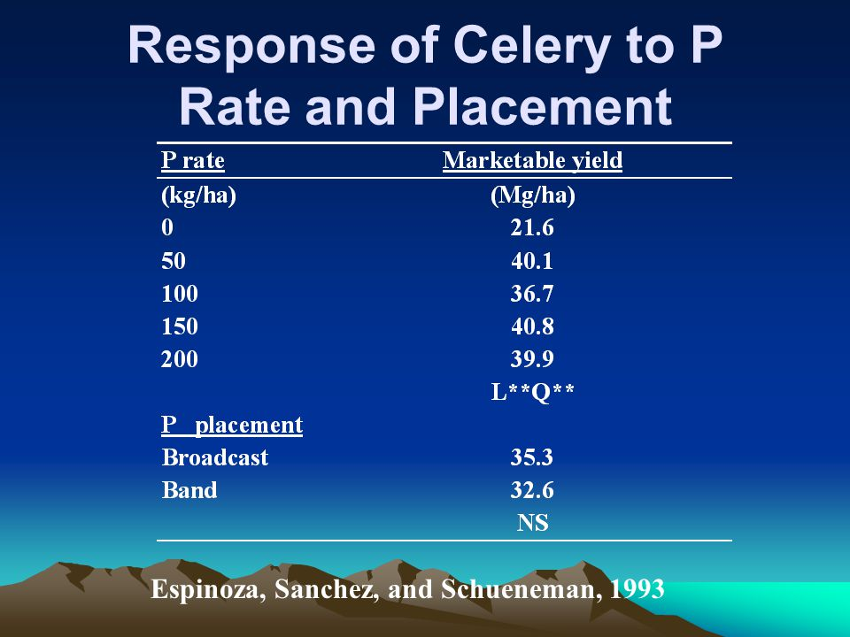 Response of Celery to P Rate and Placement