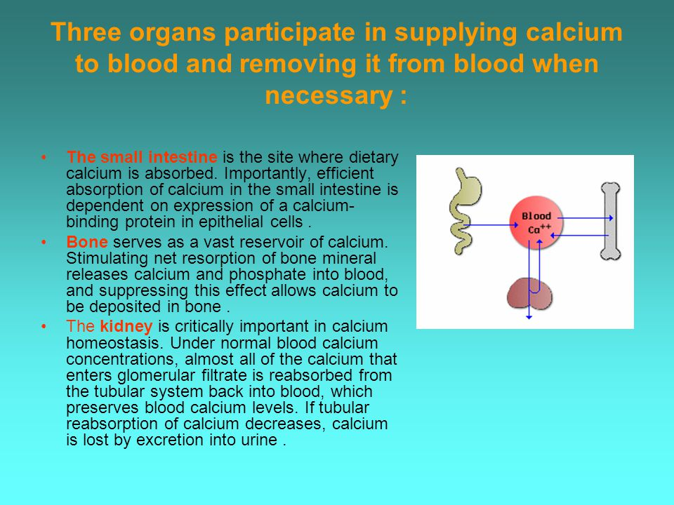 Three organs participate in supplying calcium to blood and removing it from blood when necessary: