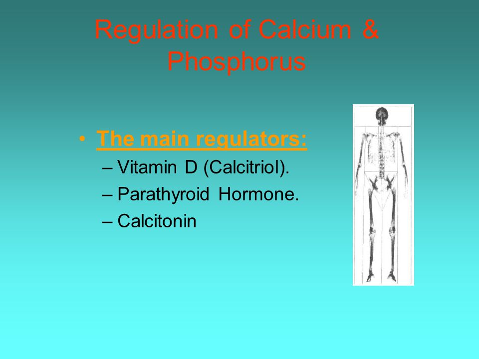 Regulation of Calcium & Phosphorus
