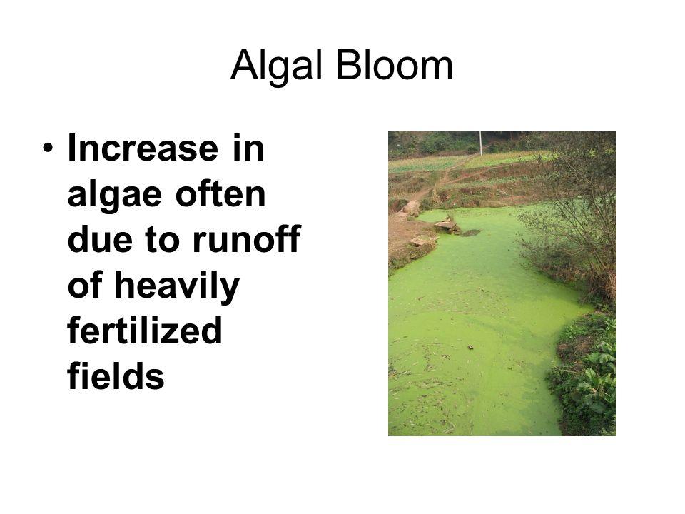 Algal Bloom Increase in algae often due to runoff of heavily fertilized fields