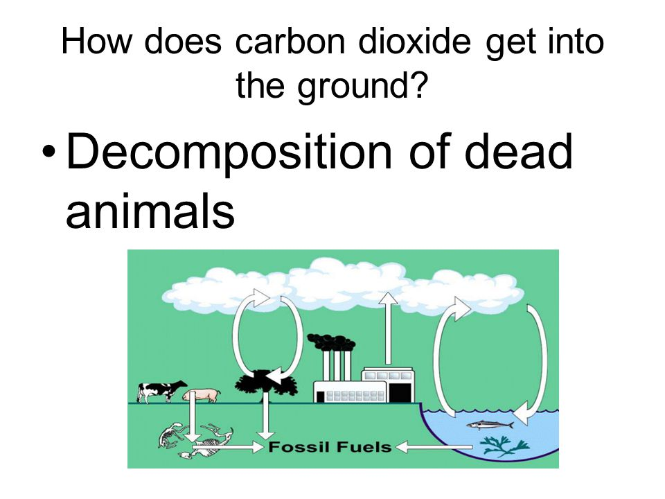 How does carbon dioxide get into the ground