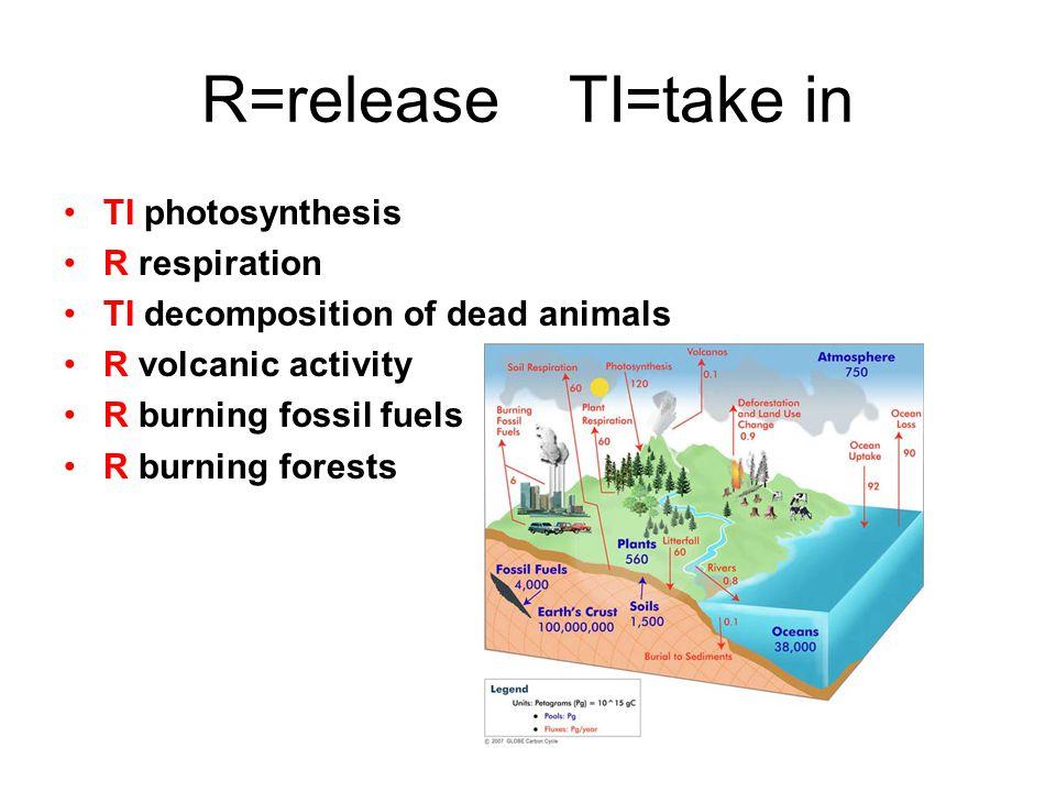 R=release TI=take in TI photosynthesis R respiration
