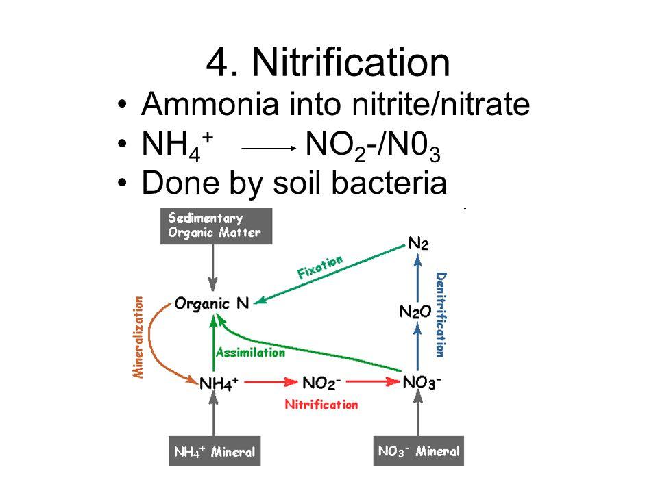 4. Nitrification Ammonia into nitrite/nitrate NH4+ NO2-/N03