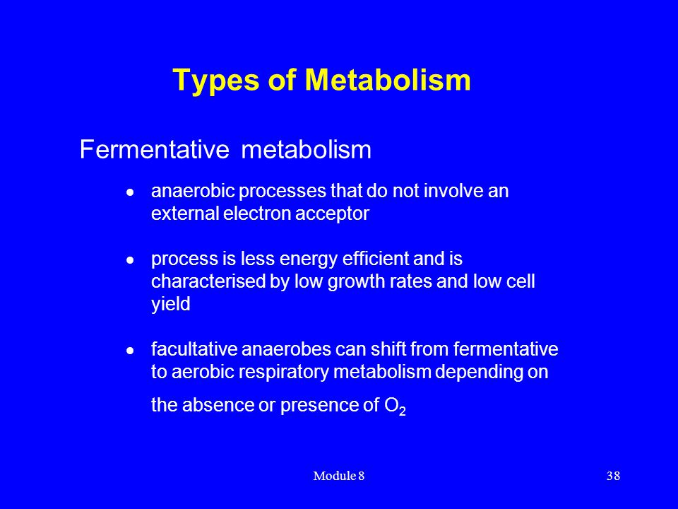Types of Metabolism Fermentative metabolism