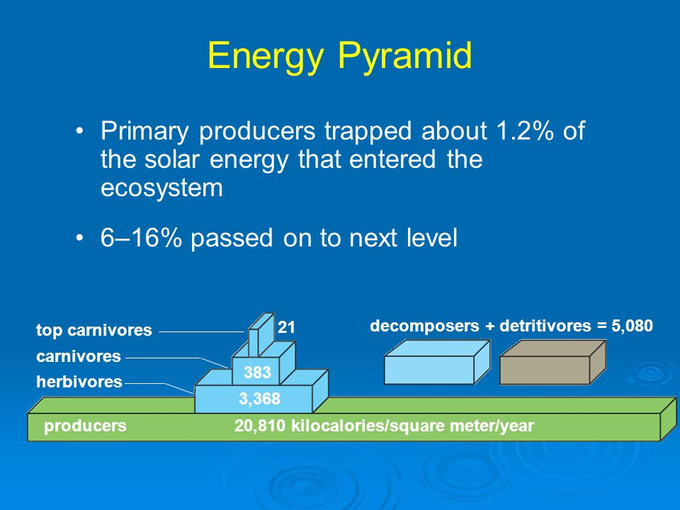 Energy Pyramid Primary producers trapped about 1.2% of the solar energy that entered the ecosystem.