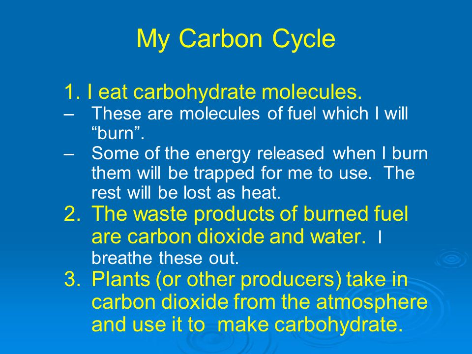 My Carbon Cycle 1. I eat carbohydrate molecules.