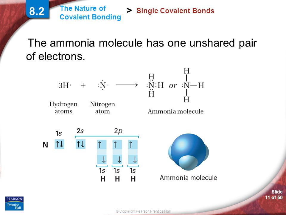 The ammonia molecule has one unshared pair of electrons.