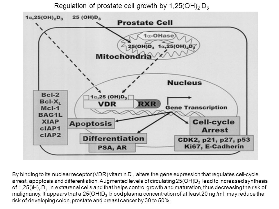 Regulation of prostate cell growth by 1,25(OH)2 D3