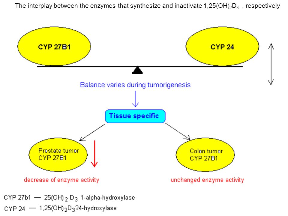 The interplay between the enzymes that synthesize and inactivate 1,25(OH)2D3 , respectively