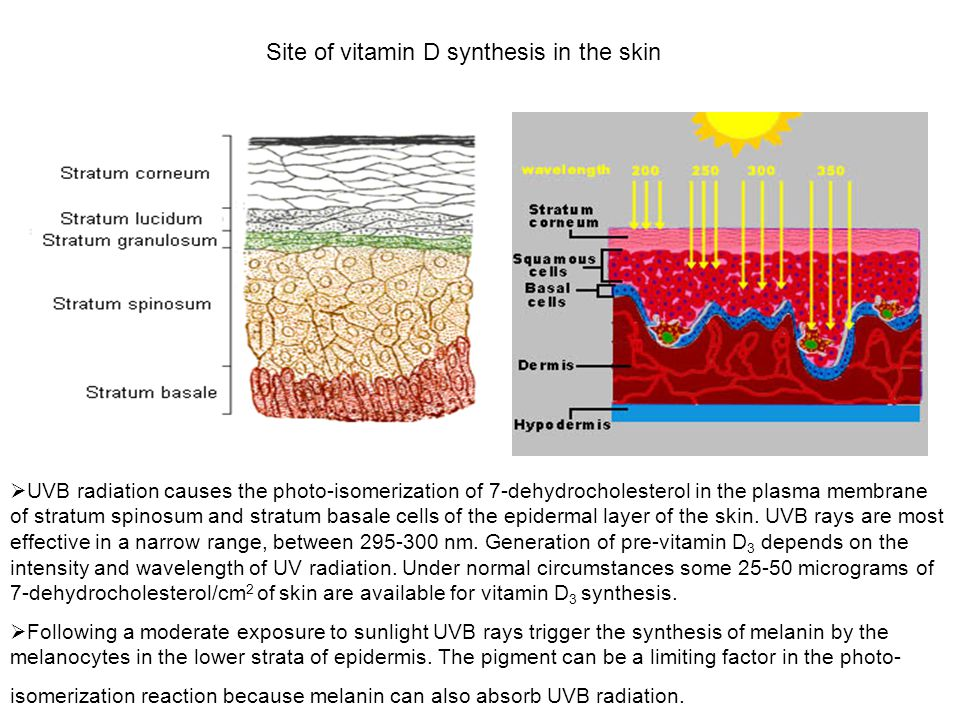 Site of vitamin D synthesis in the skin