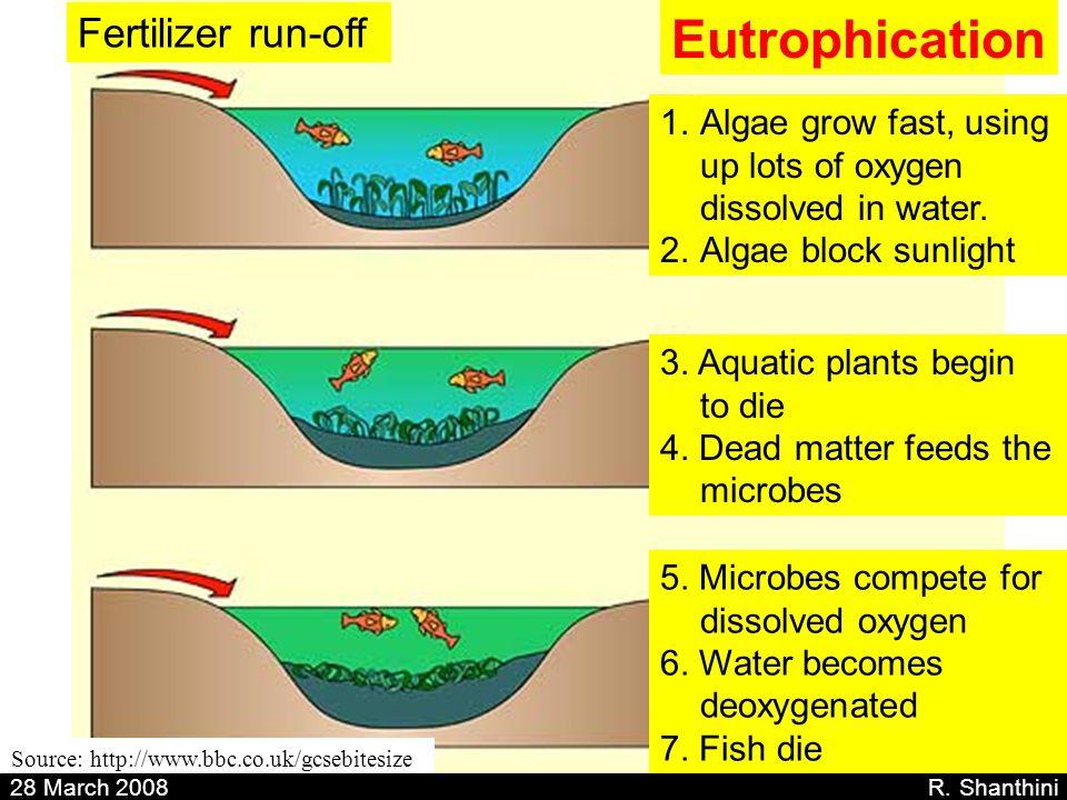 Eutrophication Fertilizer run-off