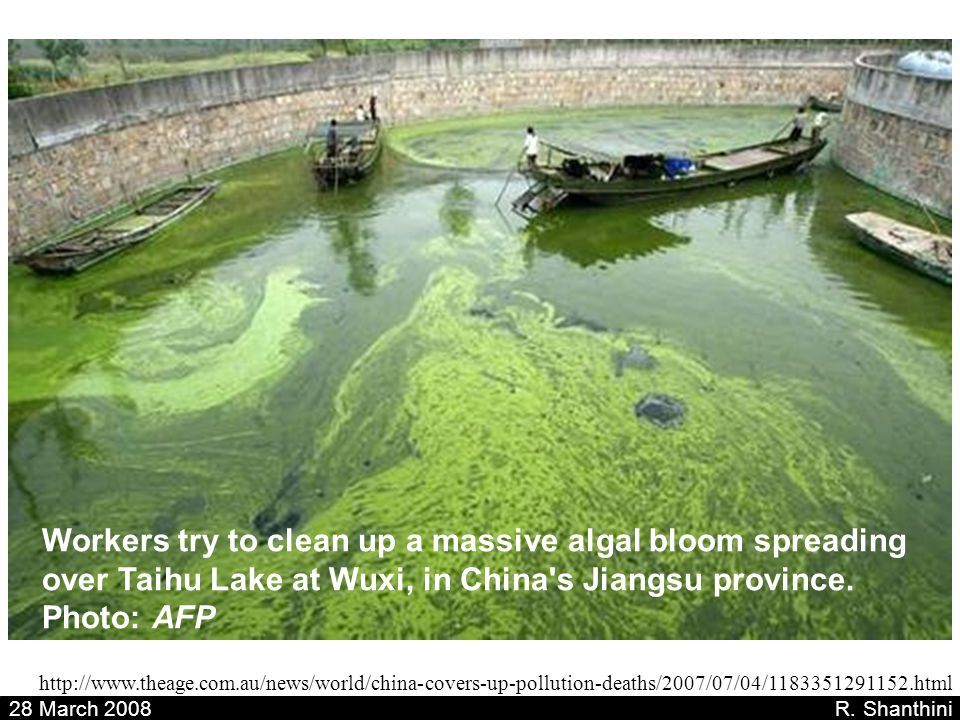 Workers try to clean up a massive algal bloom spreading over Taihu Lake at Wuxi, in China s Jiangsu province. Photo: AFP