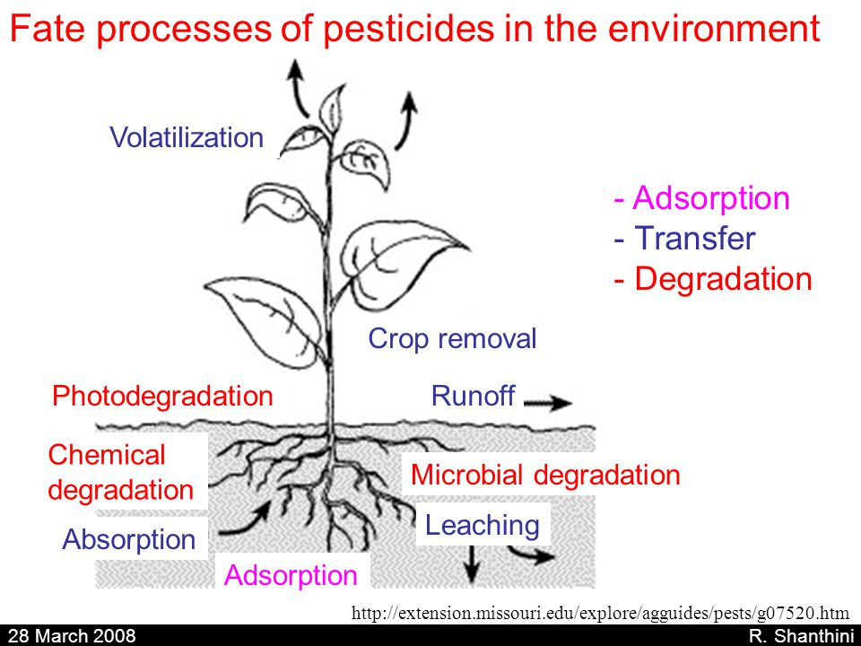 Fate processes of pesticides in the environment