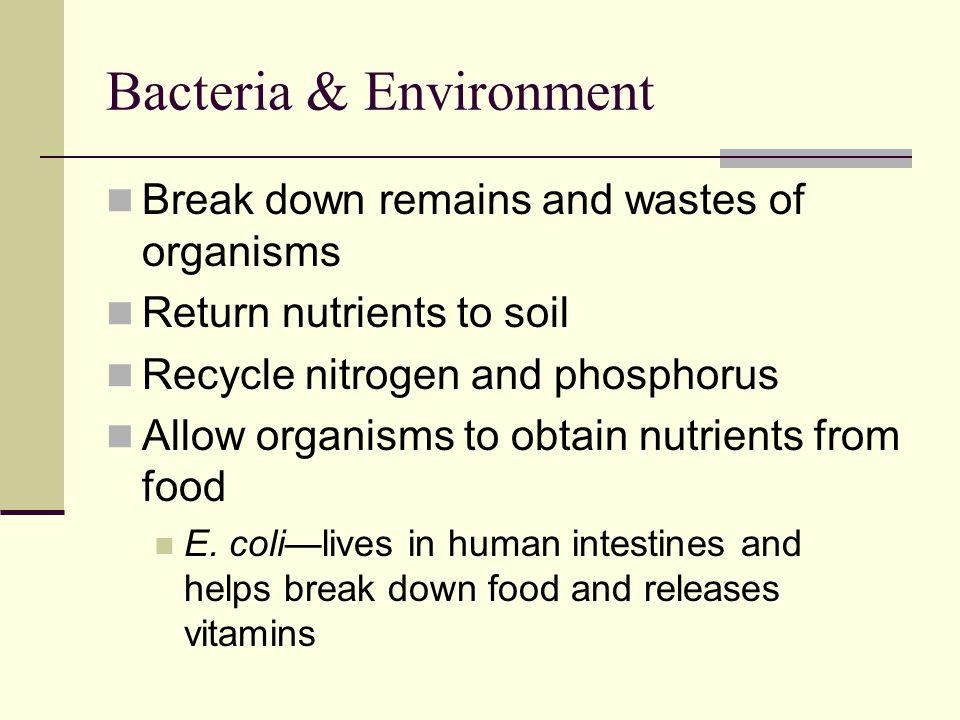Bacteria & Environment