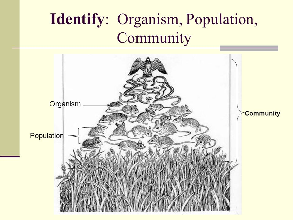 Identify: Organism, Population, Community