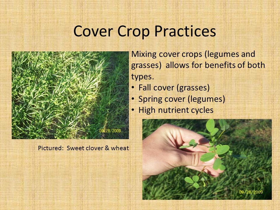 Cover Crop Practices Mixing cover crops (legumes and