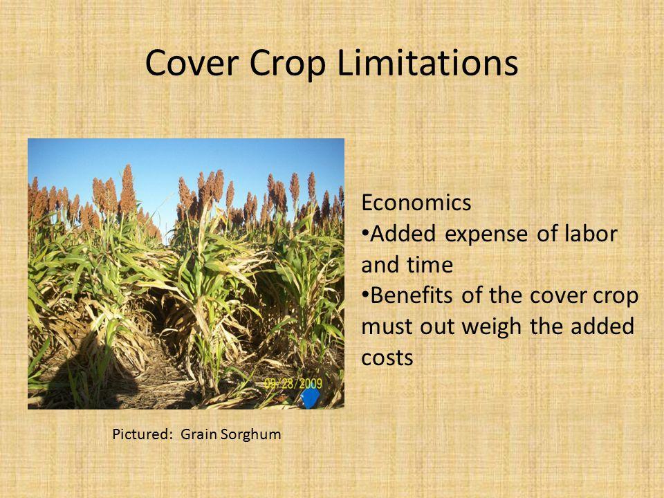 Cover Crop Limitations