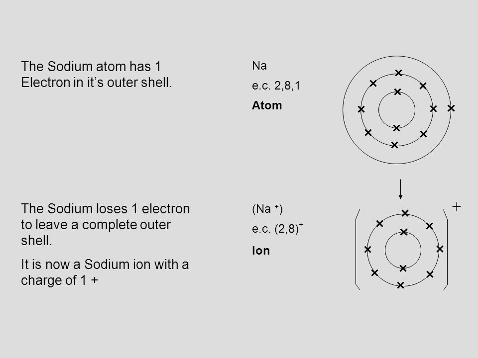 + The Sodium atom has 1 Electron in it's outer shell.