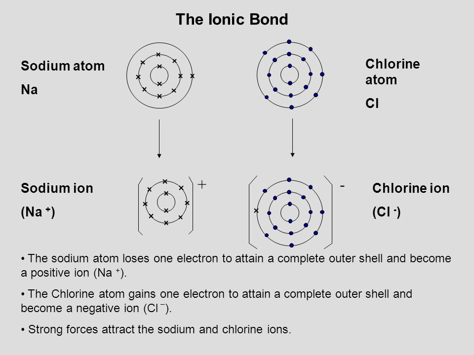 The Ionic Bond + - Sodium atom Na Chlorine atom Cl Sodium ion (Na +)