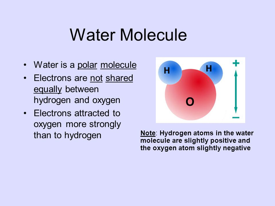 Water Molecule Water is a polar molecule